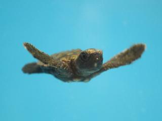 Local baby turtles find shelter at aquarium