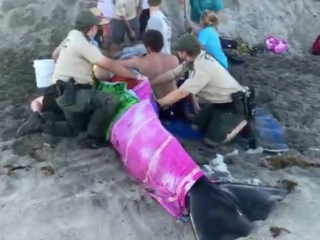 Whale dies after stranding on Juno Beach