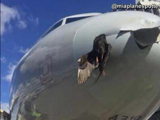 Plane lands safely in Miami after bird strike