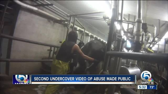 Group claims abuse at 2nd Okeechobee dairy farm