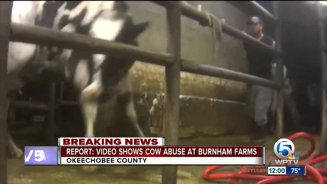 Animal Recovery Mission claims animal abuse at Burnham Dairy Farm in…