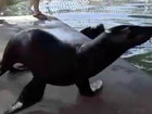8 sea lions return to Keys attraction after Irma