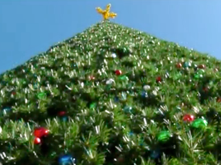 Costs of city holiday tree displays vary