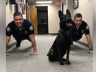 VIDEO: K9, cops do push-ups to fight crime