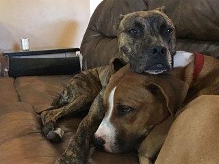 Off-duty PBSO deputy shoots, kills two dogs