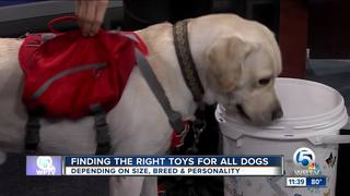 Find the right gift for your dog