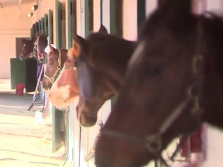Horses evacuated from fire reunited with owners