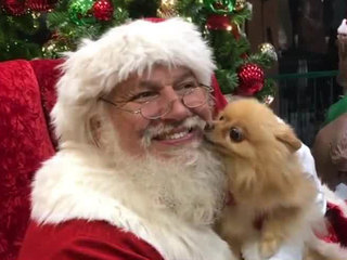Pets pose with Santa at Palm Beach Outlets