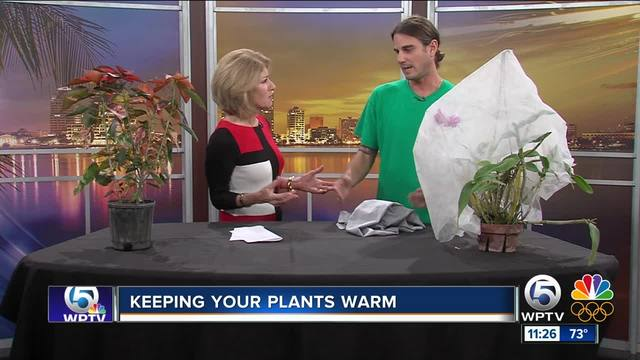 Matt Boyson at the Mounts Botanical Garden has advice on keeping your tropical plants safe during cold weather