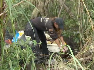 Slaughtered horses found near Miami-Dade farm