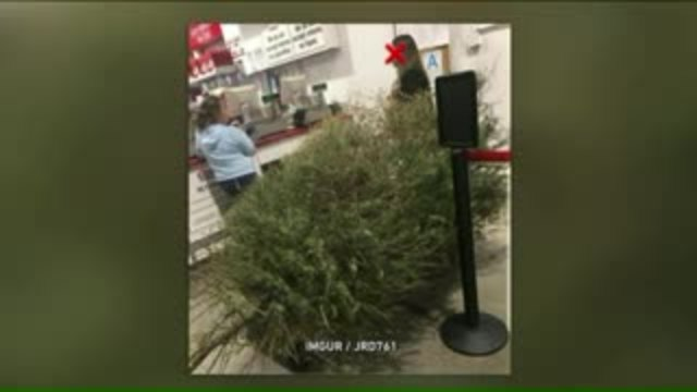 woman reportedly returns dead christmas tree to costco gets full refund
