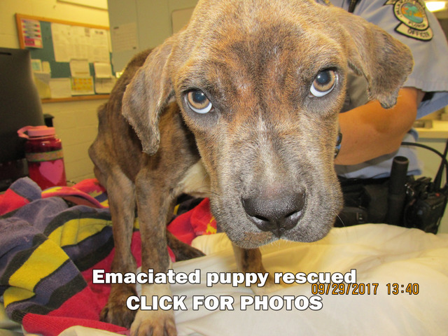 Photos: Emaciated puppy rescued in West Palm Beach
