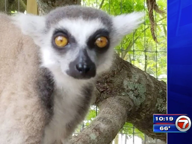 Exotic Animals Missing From Florida Sanctuary After Fake Craigslist Ad