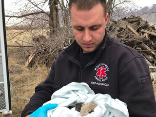 Firefighter hears crying, rescues 7 tiny kittens