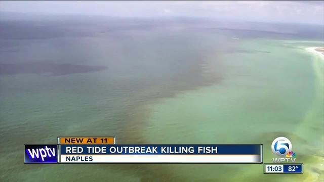 Focus Lee County >> Red tide outbreak killing fish off Florida's Gulf Coast ...