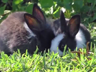Pet rescue saves rabbits at Boynton Beach park