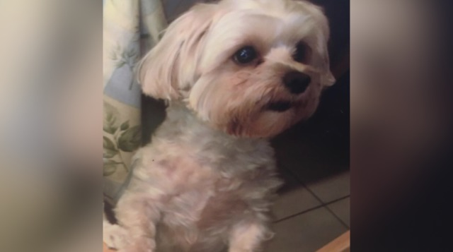 Dog stolen from Palm Beach Gardens Petco