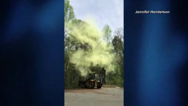 Allergy nightmare: massive pollen cloud explodes from tree