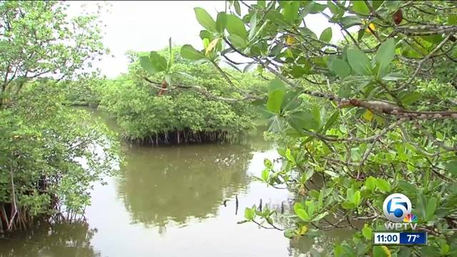 Dr- Edie Widder- Local scientist fears toxic algae blooms could thrive…