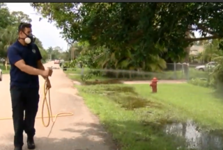 Prepare for lots of mosquitoes in Palm Beach Co.