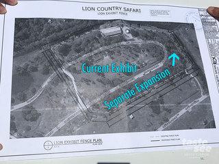 Lion Country Safari will begin breeding lions