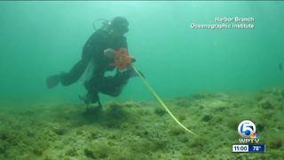 Indian River Lagoon impacting near-shore reefs