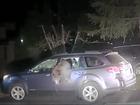 California deputy frees trapped bear