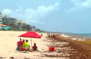 Excessive seaweed on beach causing problems