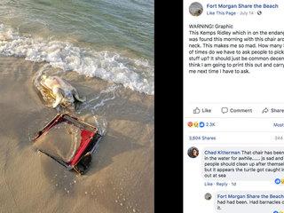 Sea turtle found dead, beach chair around neck