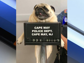Bail paid in cookies after dog's mugshot posted