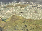 Hundreds of fish dead in pond near Jupiter