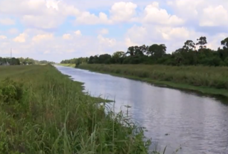 Toxic algae found in St. Lucie Canal