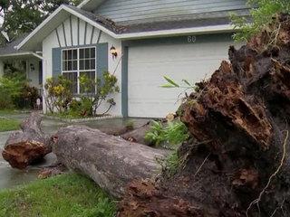 2 people struck by fallen tree in Central Fla.