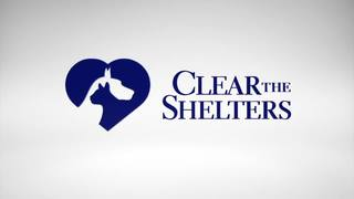'Clear the Shelters' animal adoption drive today