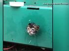 Kitten gets stuck in a generator