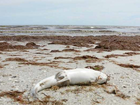 Over 3 million pounds of dead fish in SW Florida