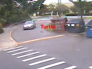 Driver intentionally runs over gopher tortoise