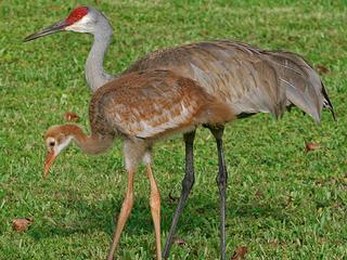 150 birds killed to protect university work