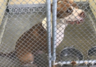 Reports released on St. Lucie animal shelter