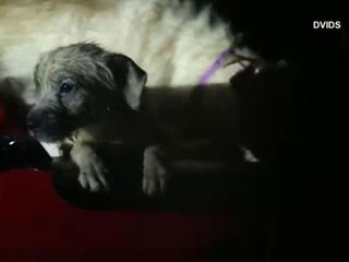 VIDEO: Pups rescued from Florence's flood waters