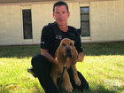 Meet Bandit, JPD's newest bloodhound