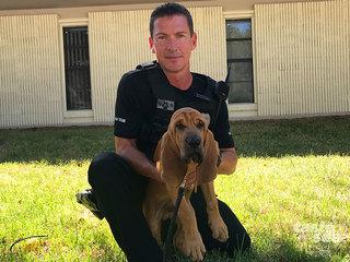 Meet Bandit, JPD's newest bloodhound