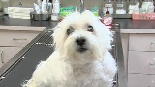 Puppies blamed for sickening people