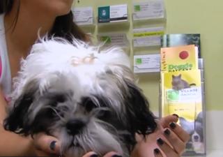 Vets: Don't misconstrue FDA warning on flea meds