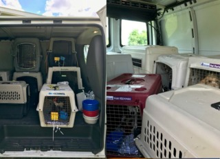 25 dogs rescued from Puerto Rico