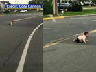 Driver finds baby crawling across busy NJ road