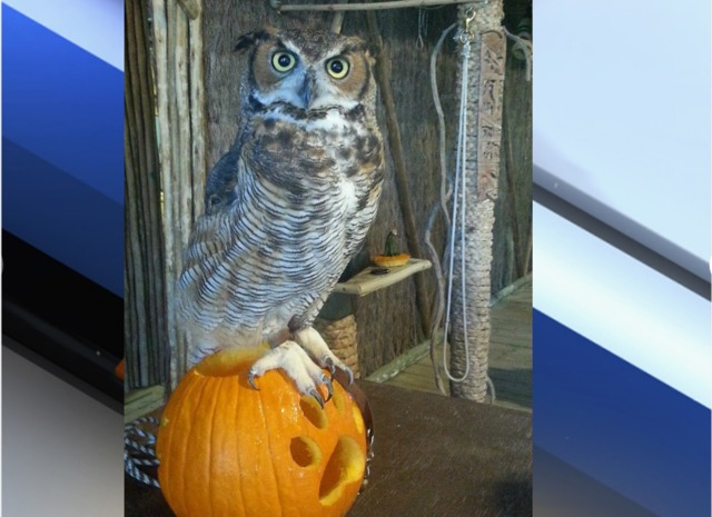 the best halloween events in south florida wptvcom