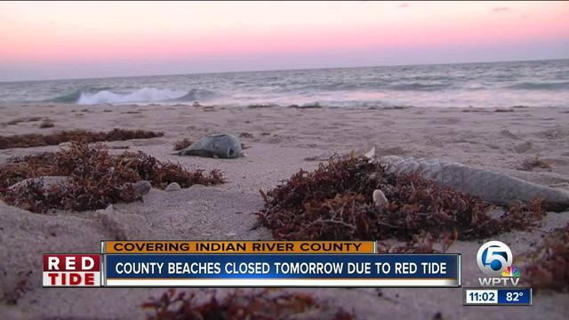 High Levels Of Red Tide In Vero Beach