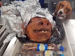 Beagle intercepts roasted pig at Atlanta airport