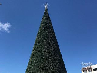 100-foot Christmas tree installation underway